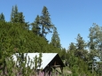 Přístřešek je schován v kleči těsně nad pásmem lesa.