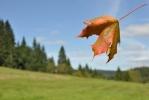 ... a na závěr ještě jednu skoro podzimní.