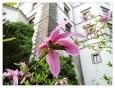 Ze zahrad vzhůru k vysokým zdem zámku vzhlíží kdejaké cizokrajné květy...