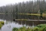 Laka, nebo také Pleso, je sice ledovcového původu, má ale uměle navýšenou hráz. Bez ní by mělké jezero již zřejmě zcela zaniklo.