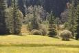 Vlhké louky a luční rašelina se chrání v Kotlině pod Pláničským rybníkem.
