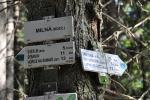 Na Liščím vrchu, nedaleko Milné, se již po zelené značce budeme vracet zpět ke Světlíku.