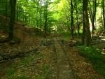 jenže v 99 roce minulého století se zdejšími lesy prohnala stoletá povodeň a všechno zdevastovala