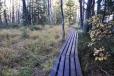 Stezka vede prakticky celá po dřevěných lávkách.