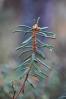 Rojovník bahenni je všude a je zde dominantní rostlinou.