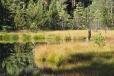 V zadní části chráněného území je i jezírko, vzniklé vytěžením rašelina.