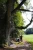 500 let stáří, přes 7m obvod. Suchá čísla zajímavého stromu, který již něco pamatuje...