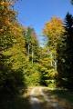 Cestou k pralesu Hojná Voda.