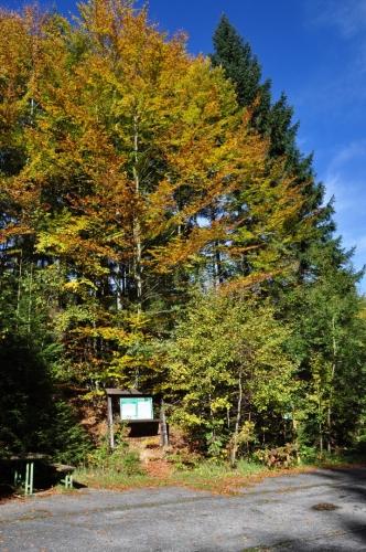 Sestoupili jsme k říčce Stropnici, podle které vede stezka starou lesní cestou zpět.