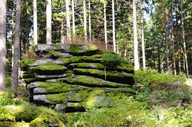 Nedaleko vrcholu se již začínají objevovat skály. Jejich množství s přibývající výškou stále roste.