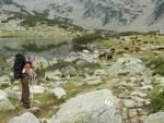 Lída a krávy u jezera Žabeško (zřejmě žabího)