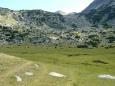 Údolí s kravami a psy