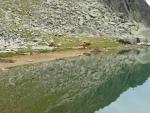 Osamělé krávy u jezera pod Kamenicou