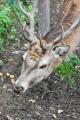 Nejlépe je možné zvěčnit jeleny. Toho i využíváme a stávíme s nimi delší dobu.
