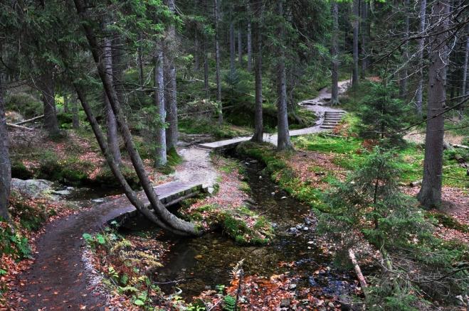 Přítok do jezera překonává upravený chodník.