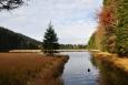 Malé Javorské jezero je jedno z osmi jezer ledovcového původu. Těmi dalšími jsou na německé straně ještě Velké Javorské a Roklanské, na české pak Černé, Čertovo, Laka, Prášilské a Plešné.