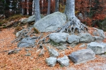 Kolem Velkého Javorského jezera je mnoho balvanů, skalních bloků a stěn. Místo je hojně navštěvováno díky velkému parkovišti hned pod jezerem.