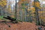 Jde se přímo mezi padlými velikány a tak je možnost pro skvělé kompozice. O tom, že je zde prales jsme nevěděli a jen náhodou vybrali tuto cestu k Falkensteinu.