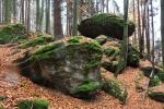 Kus výš už jsou jen mladší buky, zase ale přibývá skal a náročnější terén.