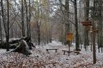 Po sestupu opět přicházíme k pralesu Zwieslerwaldhütte.