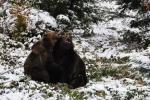 Medvědi jsou na ráně a docela se mají k světu...