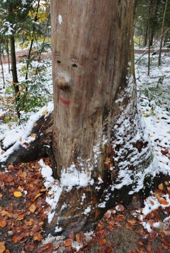 Že i stromy mají duši (a oči, nos i ústa) jsme se zde také mohli přesvědčit.