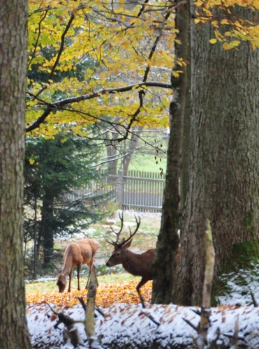 Poslední areál výběhů je s jelení zvěří. Barevně vděčnou fotku bohužel trochu kazí neostrost. Šero bylo odpoledne příliš velké.
