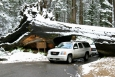 California, Sequoia National Park - Tunnel Log, 8 stop vysoký, 17 stop široký
