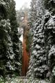 California, Sequoia National Park - vicekrál všech stromů General Grant