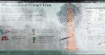 California, Sequoia National Park - vicekrál všech stromů General Grant, infocedule