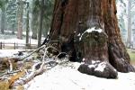 California, Sequoia National Park - pata sekvoje