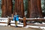 California, Sequoia National Park - trpaslíci mezi obry