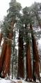 California, Sequoia National Park - Parker Group - vertikální panoráma