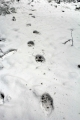 California, Sequoia National Park - medvědí stopy