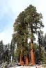 California, Sequoia National Park - mají své jméno, ale k velké lítosti nemáme zaznamenáno
