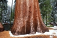 California, Sequoia National Park - dokonalost
