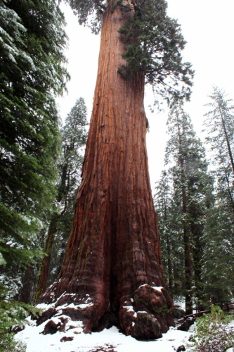 California, Sequoia National Park