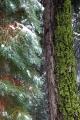 California, Sequoia National Park