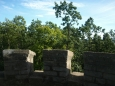 výhled do korun stromů