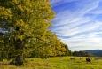 Švajglova blata - památná lípa na pokraji pastviny