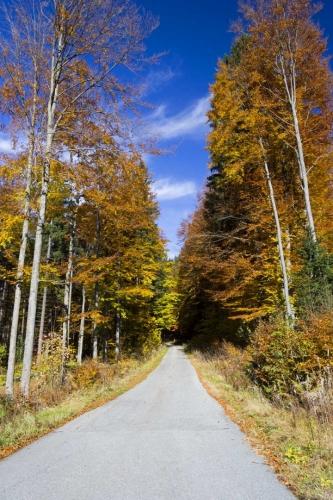 Cestou na Strážný z Bavorské strany