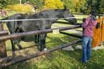 Okolí vesničky Škarez - areál zrekonstruovaného Elsina dvora - majitel zde chová koně