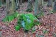 V podzimních mlhách a deštích se vybarvují některé mechy sytě zelenou.