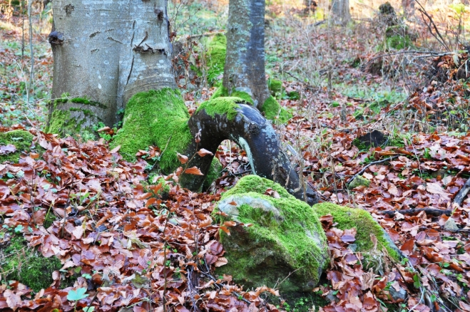 Chlumský les...