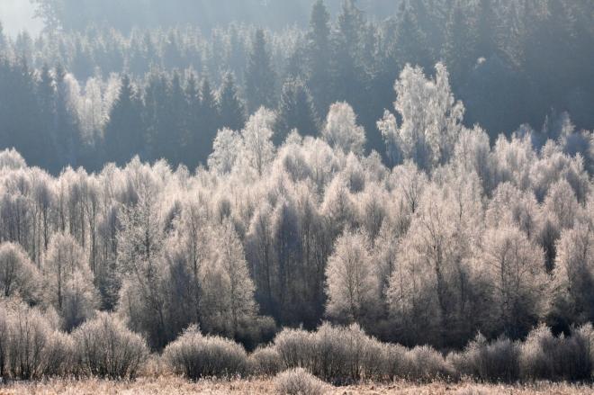 Pohled do zamrzlélo lesa.