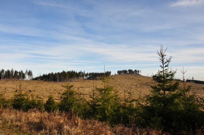 Z Okružní lesní cesty je dobře viditelný i dostupný nejvyšší vrchol Želnavské vrchoviny Lysá.