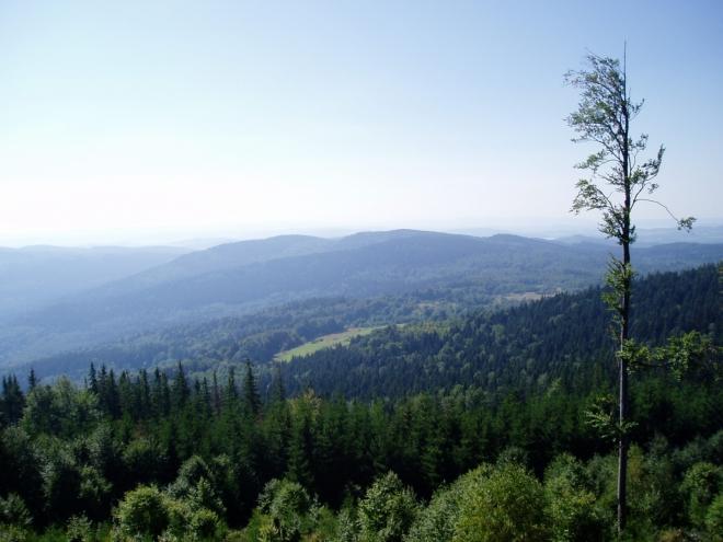 Výhledy z Velkého Plešného postupně zakrývají vzrůstající stromy.