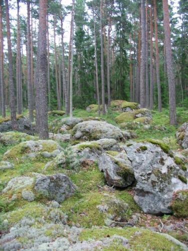 Celý les je samozřejmě zaplaven kameny různé velikosti.