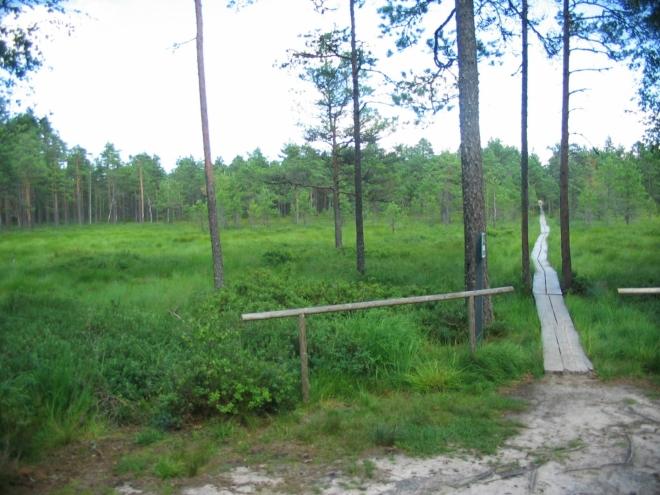 Obával jsem se, že toto známé rašeliniště bude plné turistů, ale v řídce osídleném Estonsku platí trochu jiná měřítka. Kromě školní výpravy, kterou jsme naštěstí potkali už tady na kraji, jsme skutečně mnoho lidí neviděli.