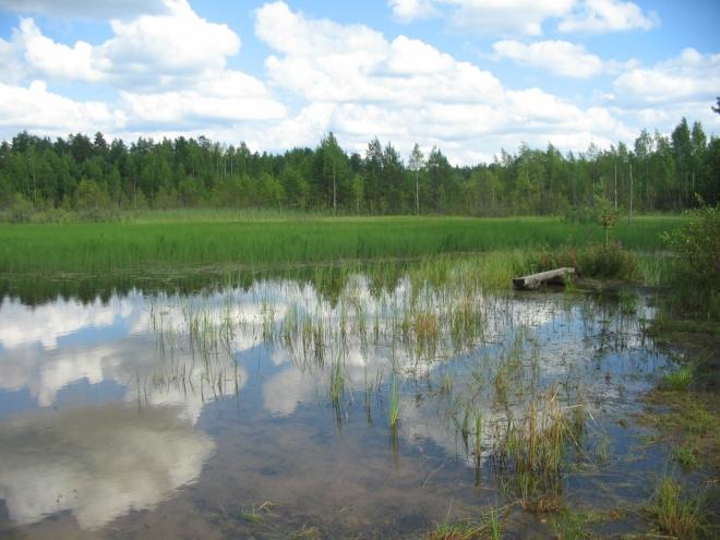 Toto převážně zarostlé jezírko by se snad dalo použít i k vykoupání. Z husté vodní zeleně se občas vynoří pár divokých kachen a myslím, že u protějšího břehu dokonce někdo rybařil.